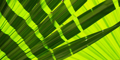 Upclose greenery representing Florida photographers and videographers
