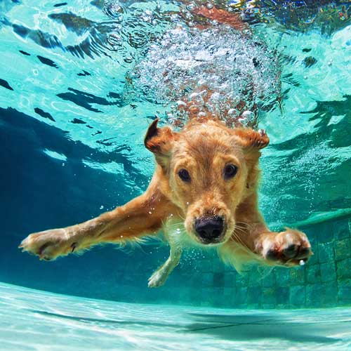 Dog under water representing creative freelance public relations consultants in Florida